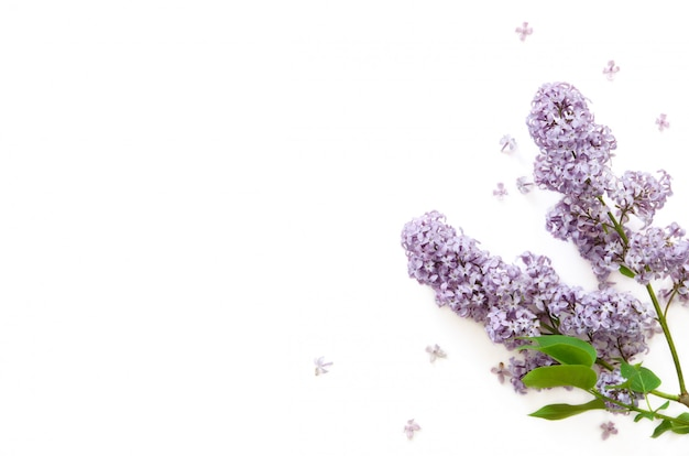 Flores de color lila. flores de primavera. vista superior, plano, copia espacio.