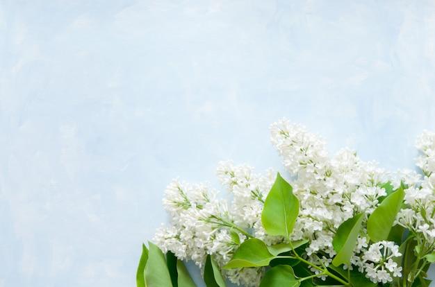 Flores de color lila sobre fondo azul. flores de primavera. vista superior, plano, copia espacio.