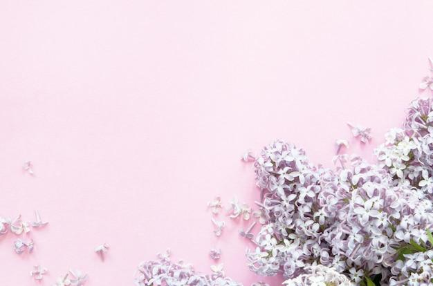 Flores de color lilas sobre fondo rosa. flores de primavera. vista superior, plano, copia espacio.