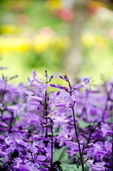 Flores de color púrpura en el jardín