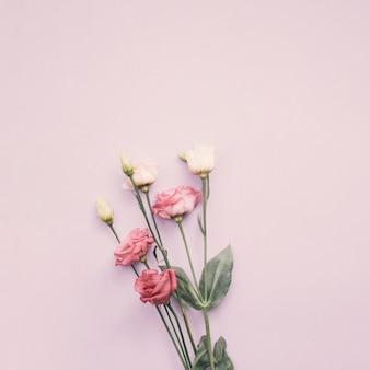Flores de color rosa brillante en mesa de luz