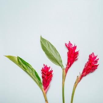 Flores de color rosa brillante sobre fondo blanco
