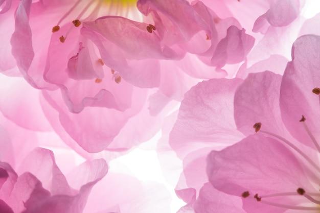Flores de color rosa de fondo sakura
