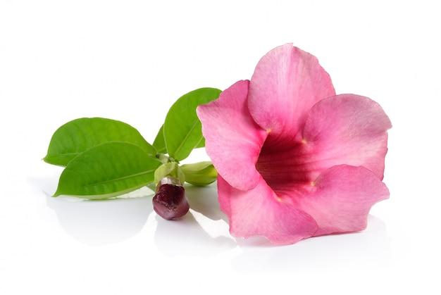 Flores de color rosa en la pared blanca