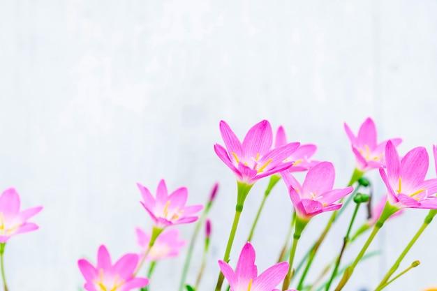 Flores de color rosa sobre un fondo blanco