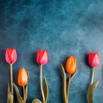 Flores coloridas del tulipán en la tabla azul