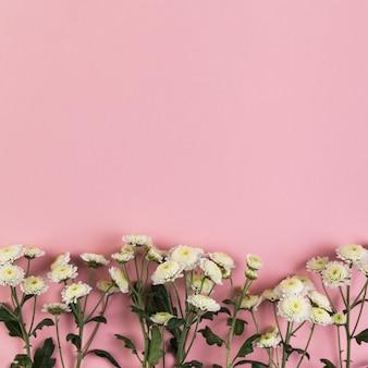 Flores de crisantemo sobre fondo rosa con espacio para escribir texto