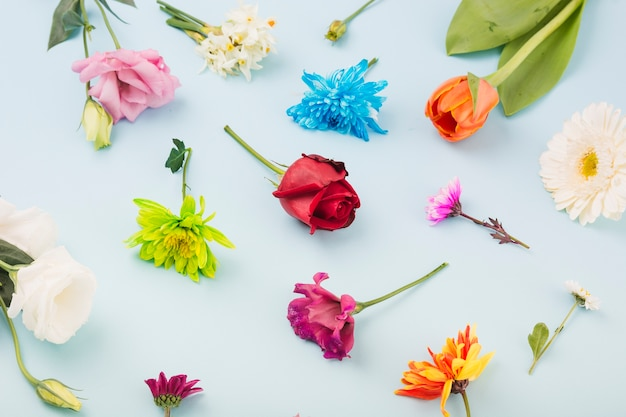 Flores de colores sobre fondo azul