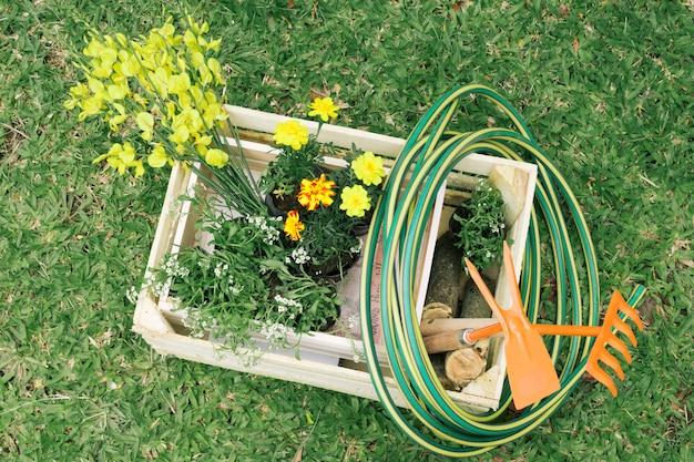 Flores y equipo de jardinería en contenedor de madera en prado.