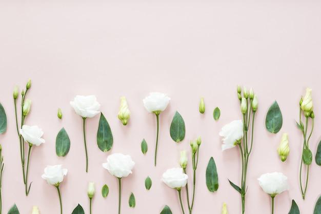 Flores de eustoma floral, hojas verdes sobre fondo rosa. vista plana, vista superior