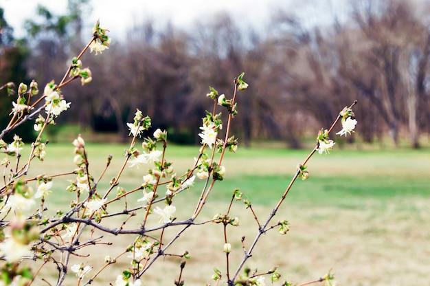 Flores florecen en los árboles.