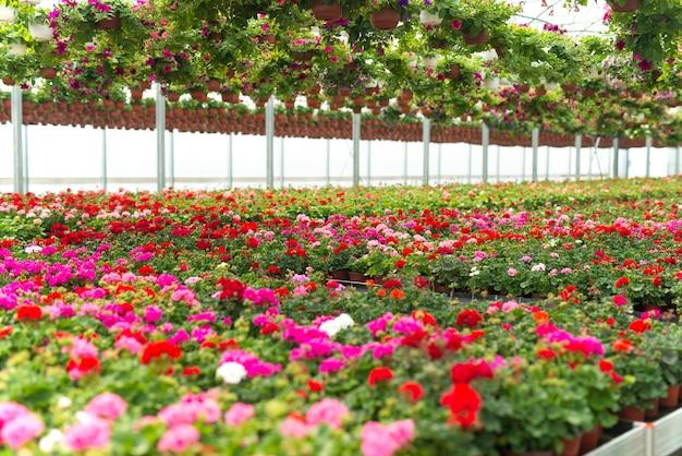 Flores floreciendo en invernadero de plantas