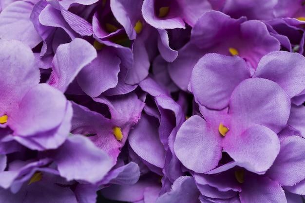 Flores florecientes de primer plano