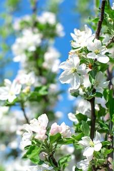 Flores florecientes en las ramas de los árboles