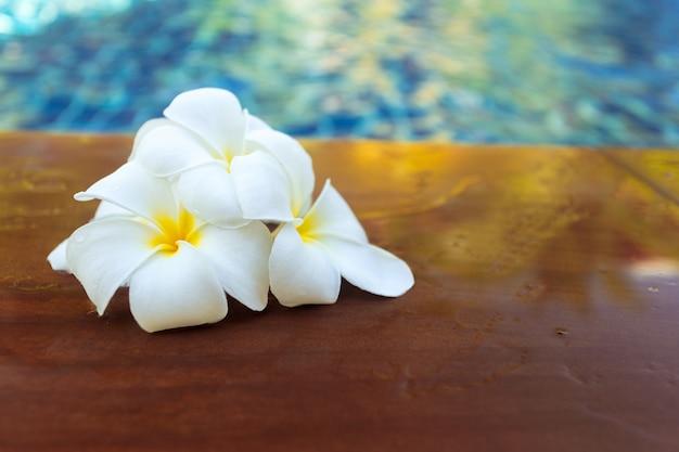 Flores flotantes de frangipani en la piscina.