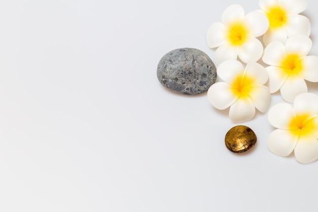 Flores de frangipani sobre fondo blanco