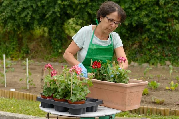 Flores de geranio para macetas de mujer