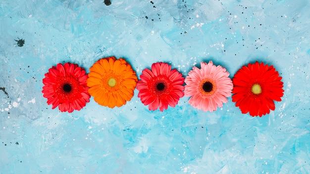 Flores de gerbera brillante en mesa azul