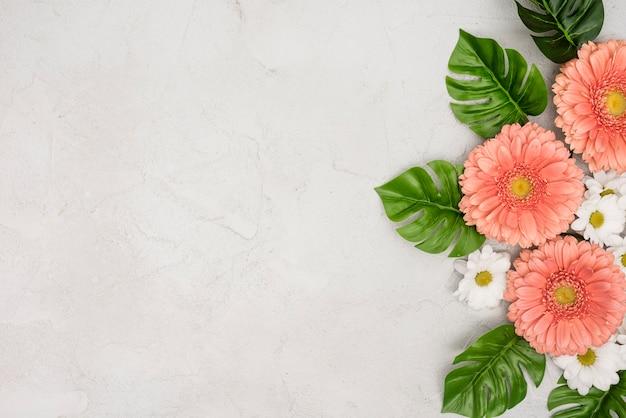 Flores de gerbera y margarita con hojas de monstera