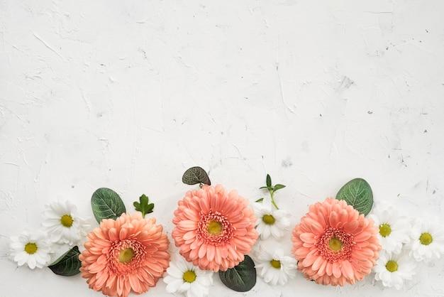 Flores de gerbera con margaritas y espacio de copia