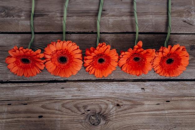 Flores de gerbera sobre un fondo gris de madera.
