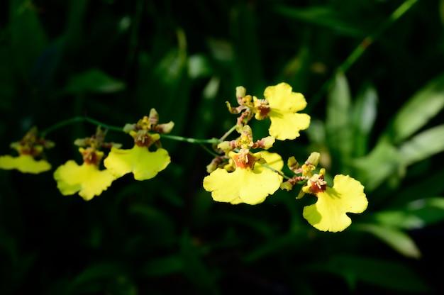 Flores hermosas de la orquídea en tailandia.