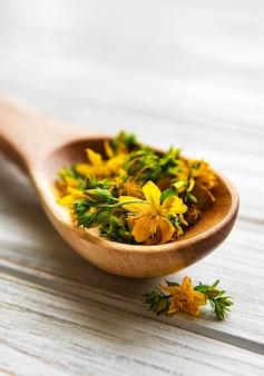 Flores de hierba de san juan