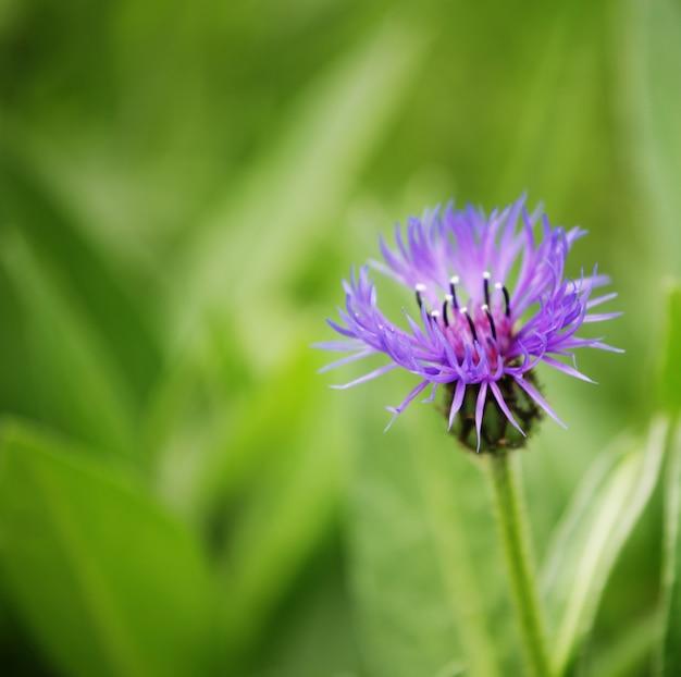 Flores en un jardín de cerca la imagen