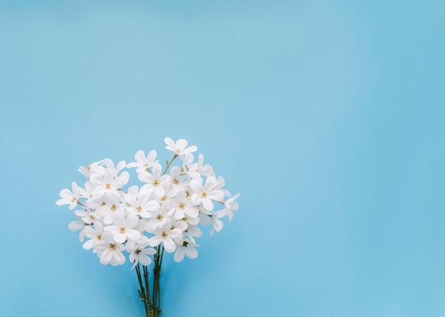 Flores de jazmin con copyspace y fondo azul.