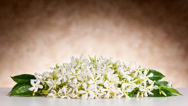 Flores de jazmín en mesa blanca y fondo beige.