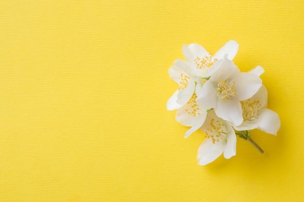 Flores de jazmín sobre un amarillo brillante.