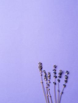 Flores de lavanda violeta sobre fondo púrpura brillante