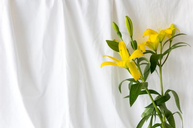 Flores de lirio amarillo frente a la cortina blanca