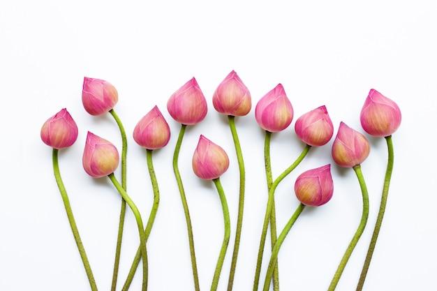 Flores de loto en blanco.