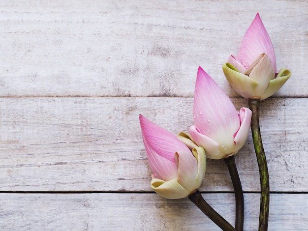 Flores de loto rosa en mesa de madera.