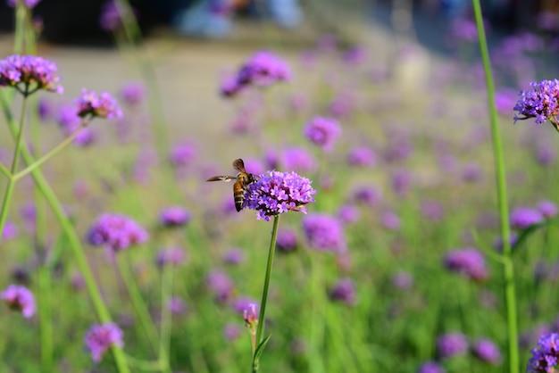 Flores moradas y abejas