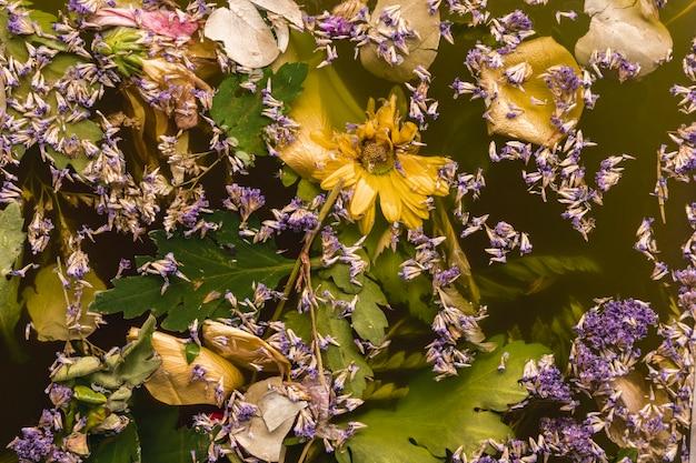 Flores moradas y amarillas en agua negra