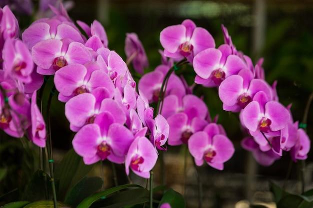 Flores moradas en la floristería
