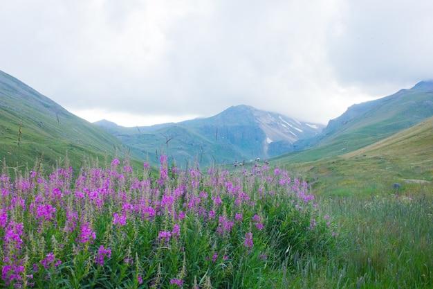 Flores moradas y un pico de montaña bajo las nubes.