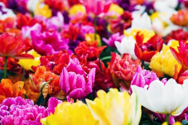 Flores con muchos colores
