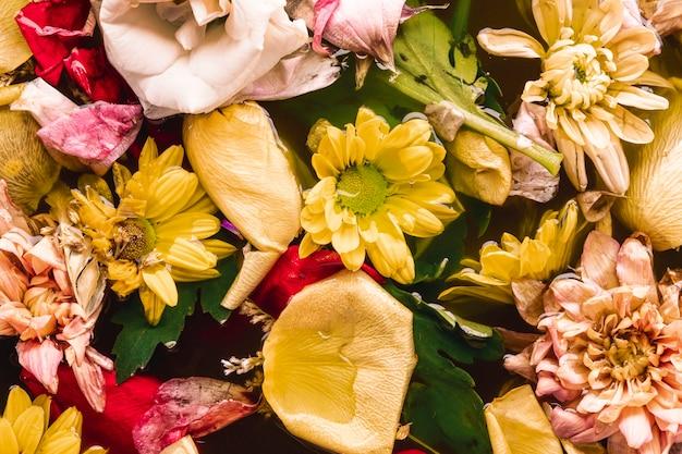 Flores multicolores en agua