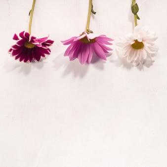 Flores multicolores colocadas en escritorio blanco