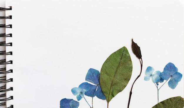 Flores naturales y planta sobre boceto de arte.
