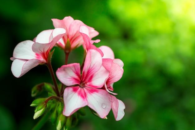Flores en la naturaleza.