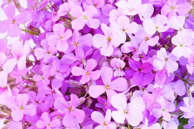 Flores de noche violeta primavera fondo suave