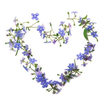 Las flores nomeolvides están dispuestas en forma de corazón. adorno de flores de primavera en una pared blanca