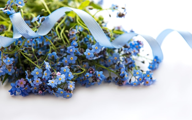 Flores nomeolvides sobre fondo blanco.