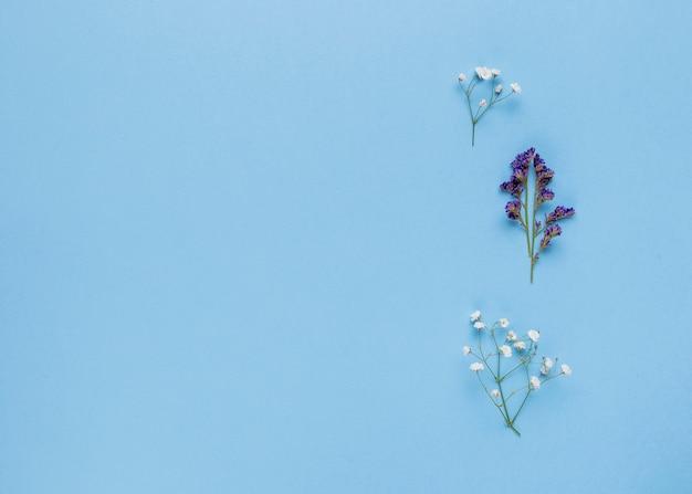 Flores ornamentales en plano con espacio de copia.