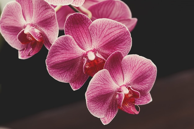 Flores de orquídea púrpura floreciente sobre fondo borroso