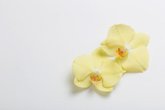 Flores de orquídeas amarillas sobre superficie blanca